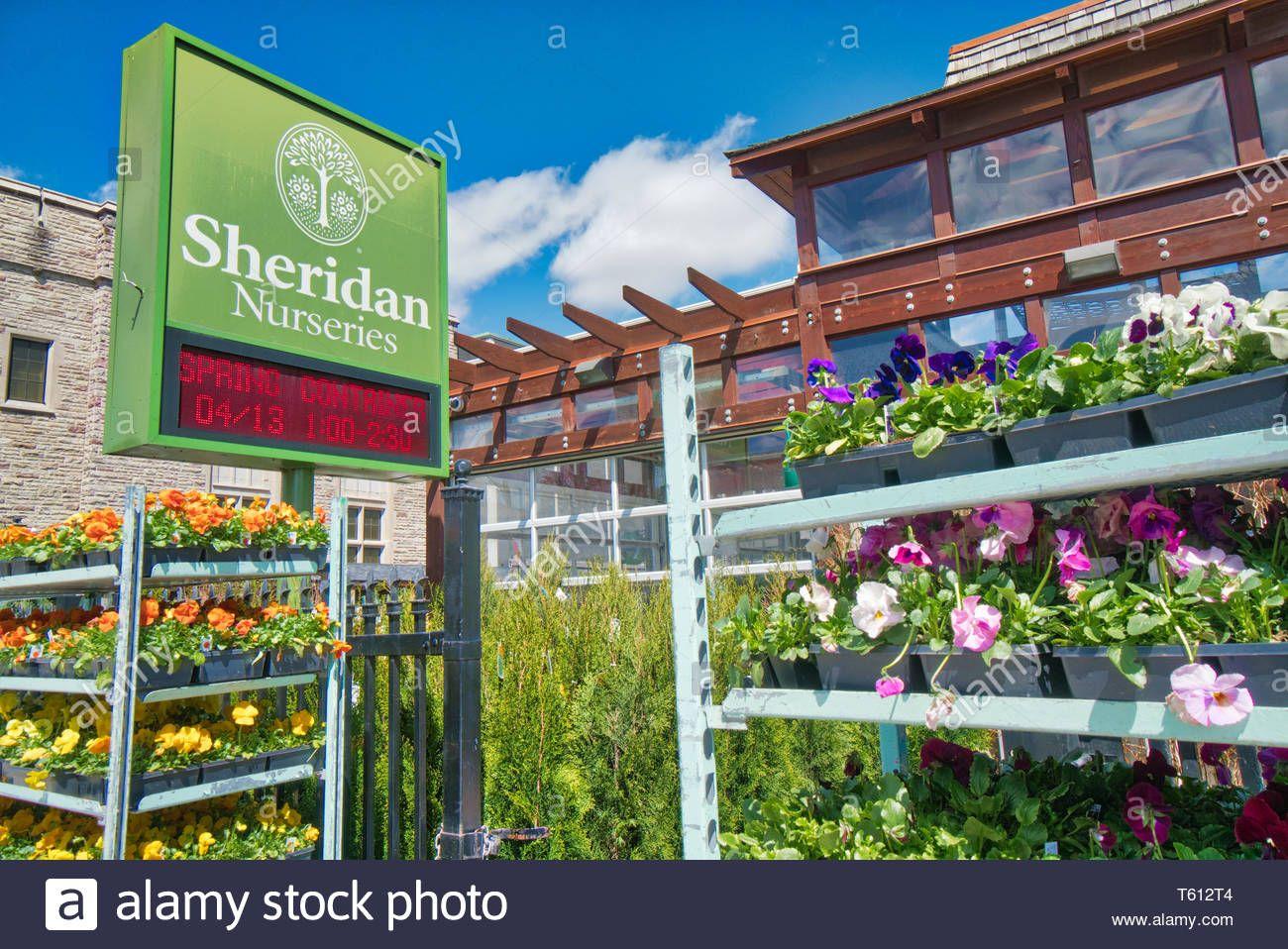 Flower Sheridan Nursery At Yonge Street