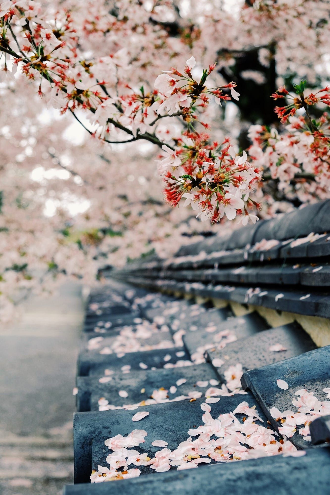Wandering the magical streets of Kyoto during sakura season... Kyoto moments by Martin Hoffmann on 500px