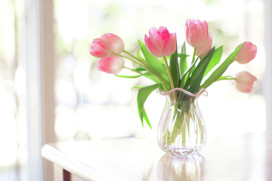 Pink Glass Vase Of Pink Tulips In Window Canvas Print Canvas Art