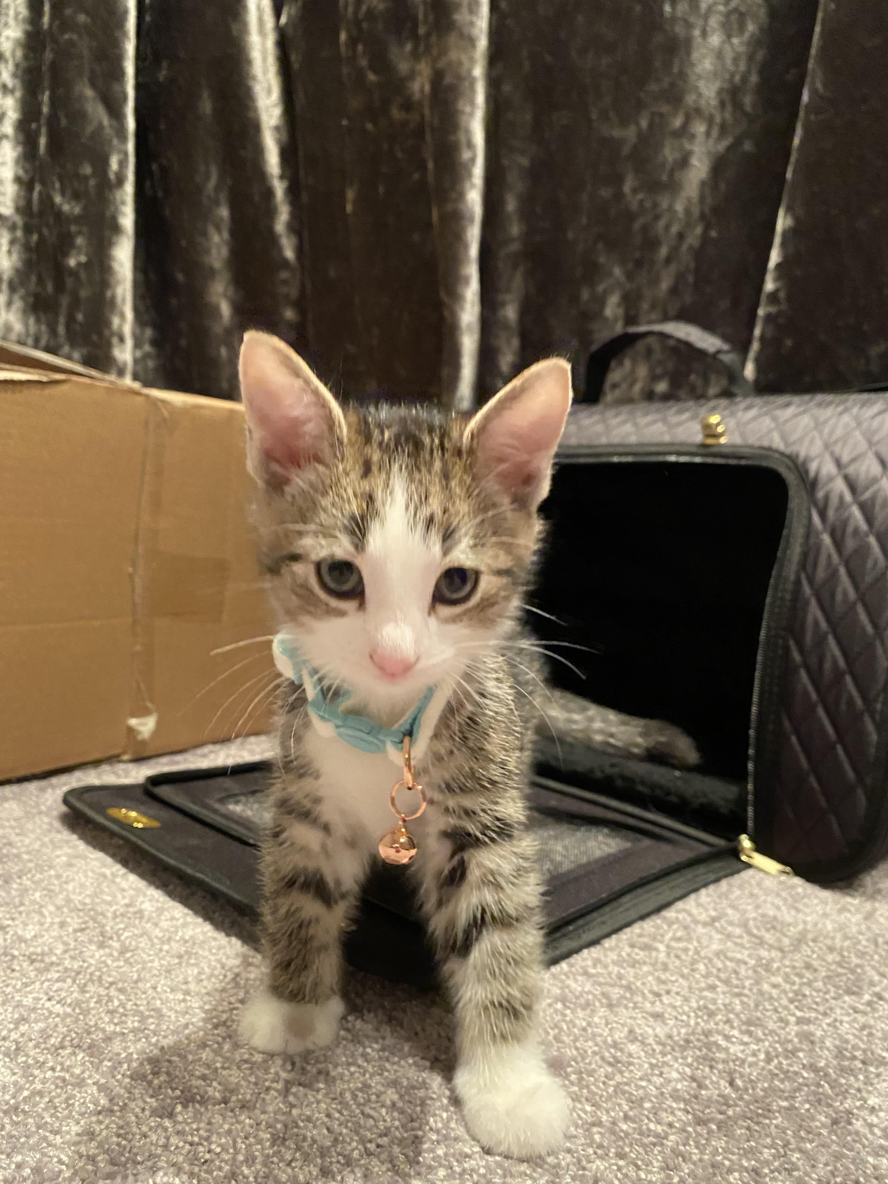 Ive Just Brought Home My First Kitten He Hid Under The Sofa For A Few Hours But Came Out To Play Just Before Bedtime Https Ift Tt 2 In 2020 Kitten Bedtime Cat Pics