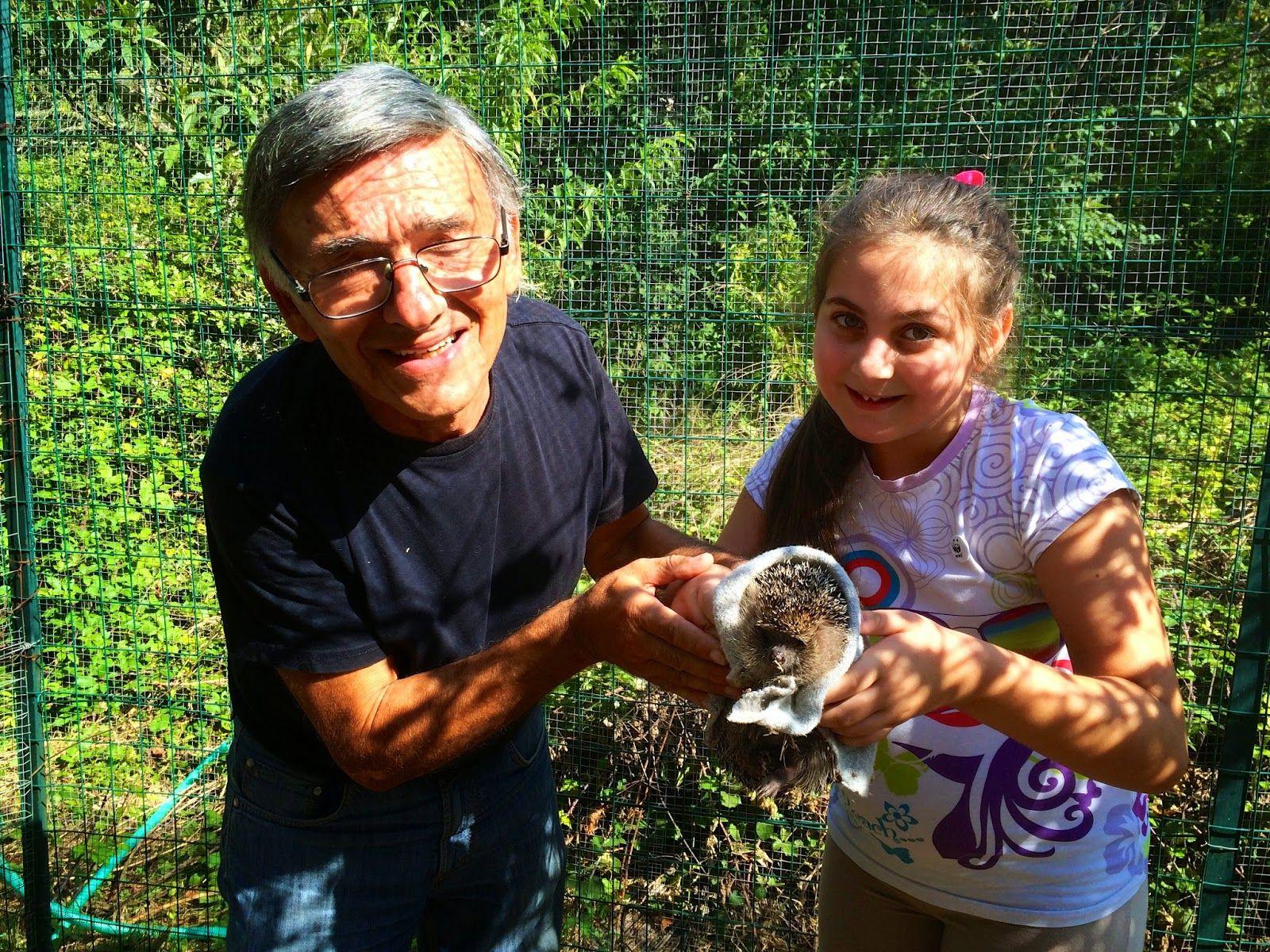 Cucciolo di riccio salvato con il latte di capra della signora Katia. E con il Wwf ritorno alla natura - FOTOGRAFIE