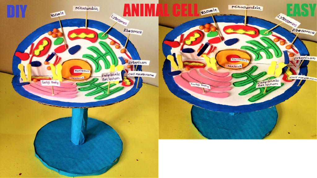 Pin by howtofunda on science exhibition models | Animal ...