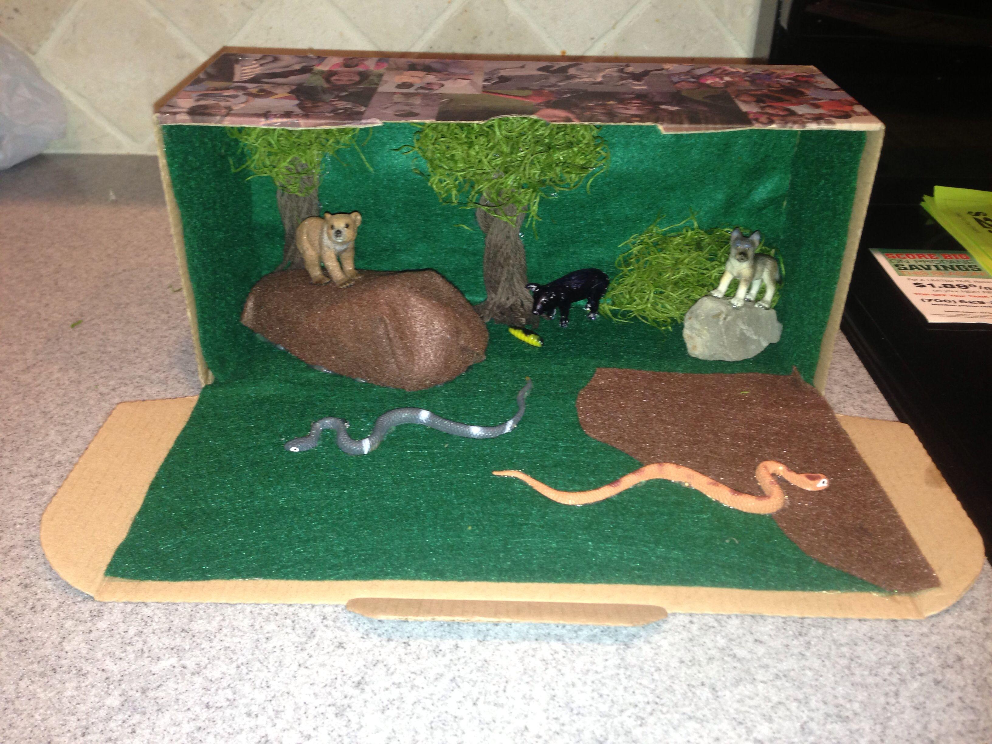 Kids Diorama With Details: Dioramas, Forest Habitat