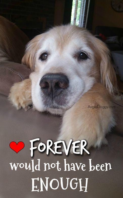 Two Years Gone Petloss Quote Rainbowbridge Goldenretriever Dogs Golden Retriever Dog Quotes Love Dogs