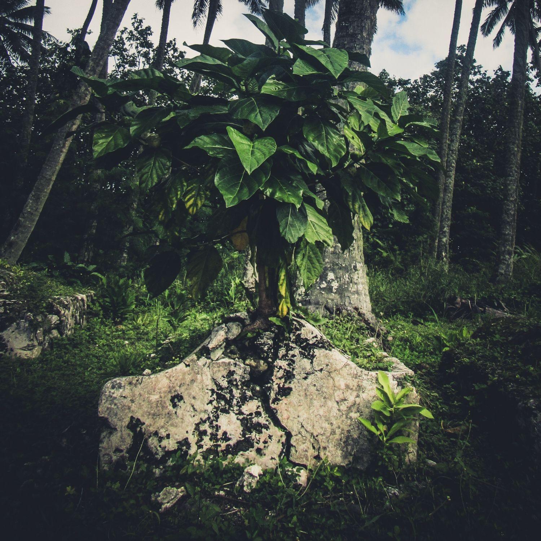 Graves of Rarotonga by Alex Huff - Exposure