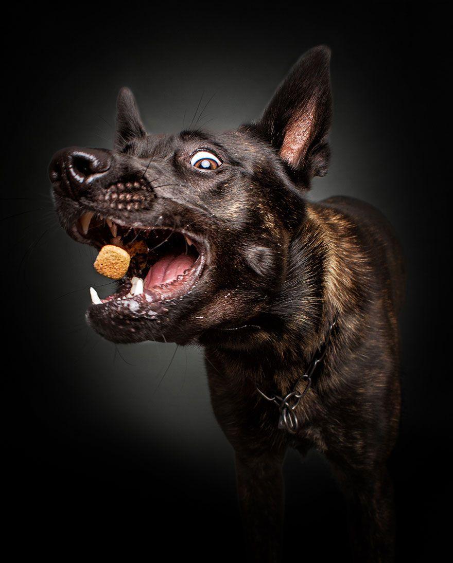 Αποτύπωσε την ξεκαρδιστική έκφραση πεινασμένων σκυλιών την ώρα του κεράσματος.