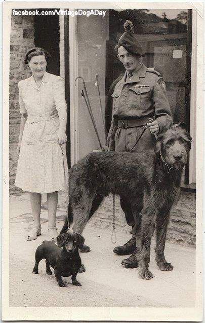Wolfhound And Dachshund C 1940 Uk Hope You Re Doing Well From