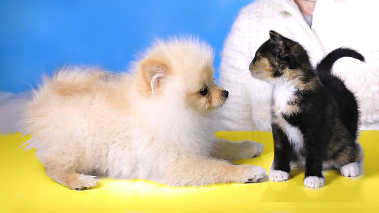 Puppy Meets Kittens For The First Time Rclbeauty101 Puppies Baby Kittens Kittens