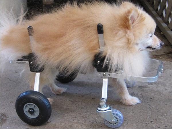 Dog Wheelchair Photo Gallery Casts And Wheels Pinterest Dog