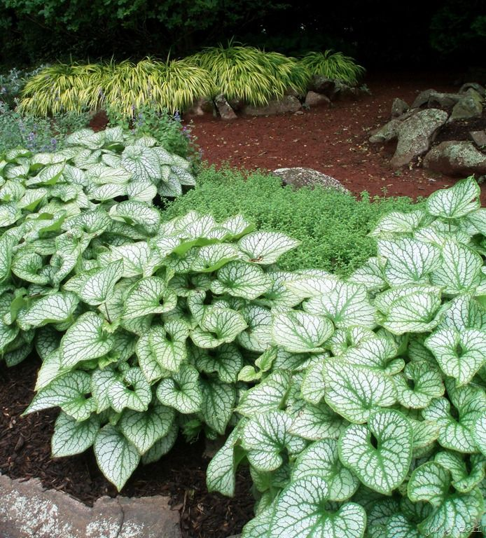 Shade Garden, Elizabeth Park, Hartford, CT