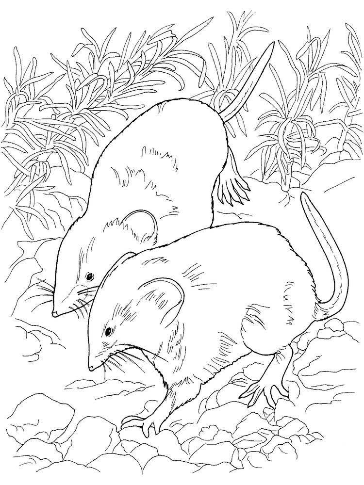 Cute Rat (Dengan gambar)