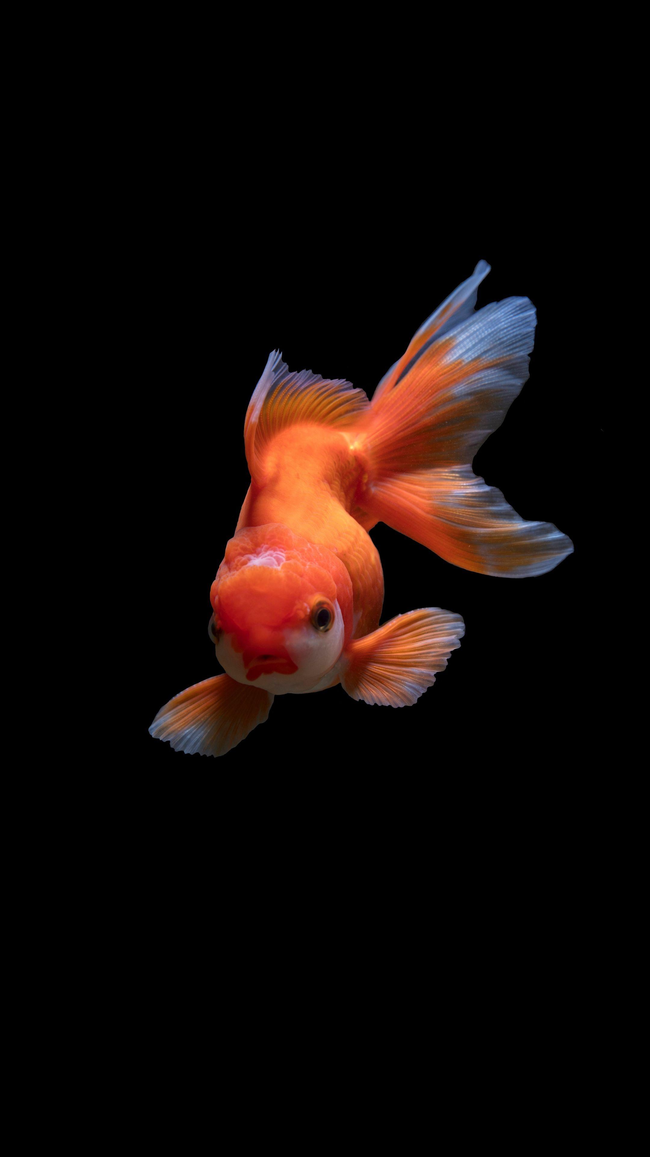Обои Аквариум, рыбка. Животные foto 6