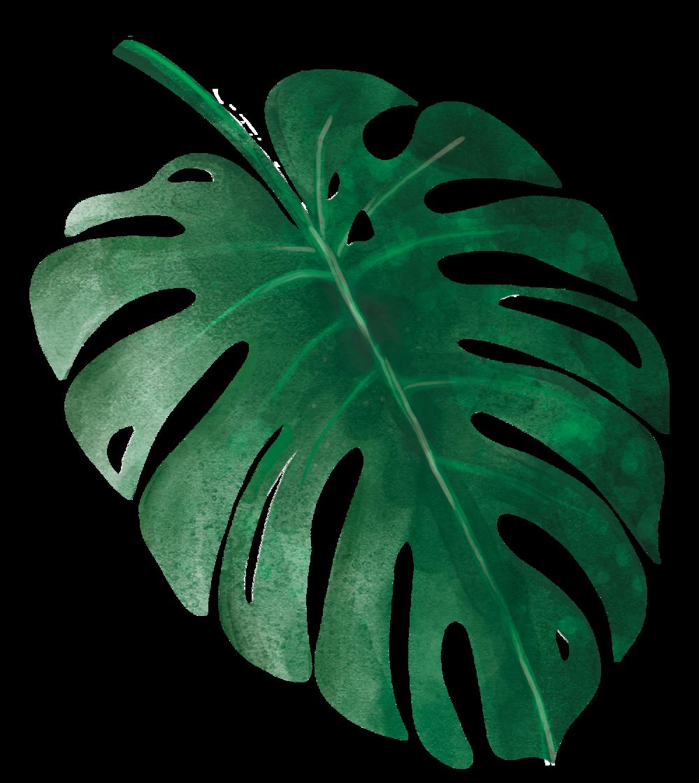 Green Leaf Background 1000 1120 Transprent Png Free Download Leaf Green Plant Green Leaf Background Leaf Background Leaf Print Art