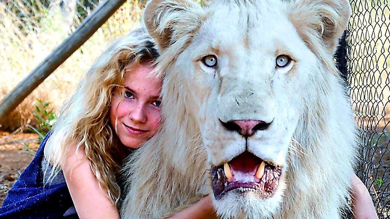 Epingle Par Bollert Sur Mia Et Le Lion Blanc Mia I Beliyat Lv 2018 Lion Blanc Lion Animaux
