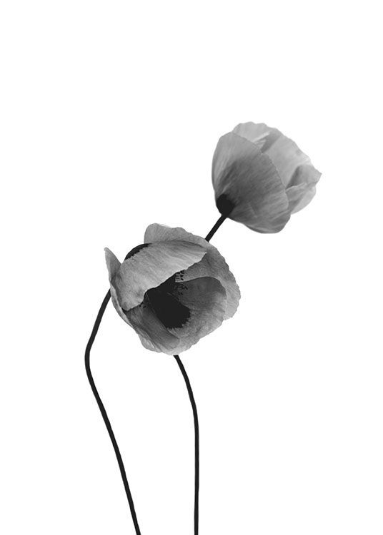 Grey poppy flowers poster