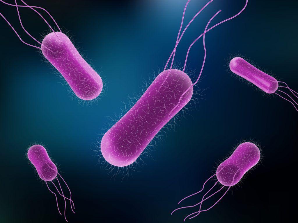 Image Of Salmonella Bacteria In The Monera Kingdom