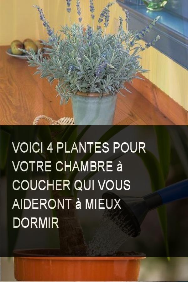 Voici 4 plantes pour votre chambre coucher qui vous aideront mieux dormir trucs astuces - Plante verte chambre a coucher ...
