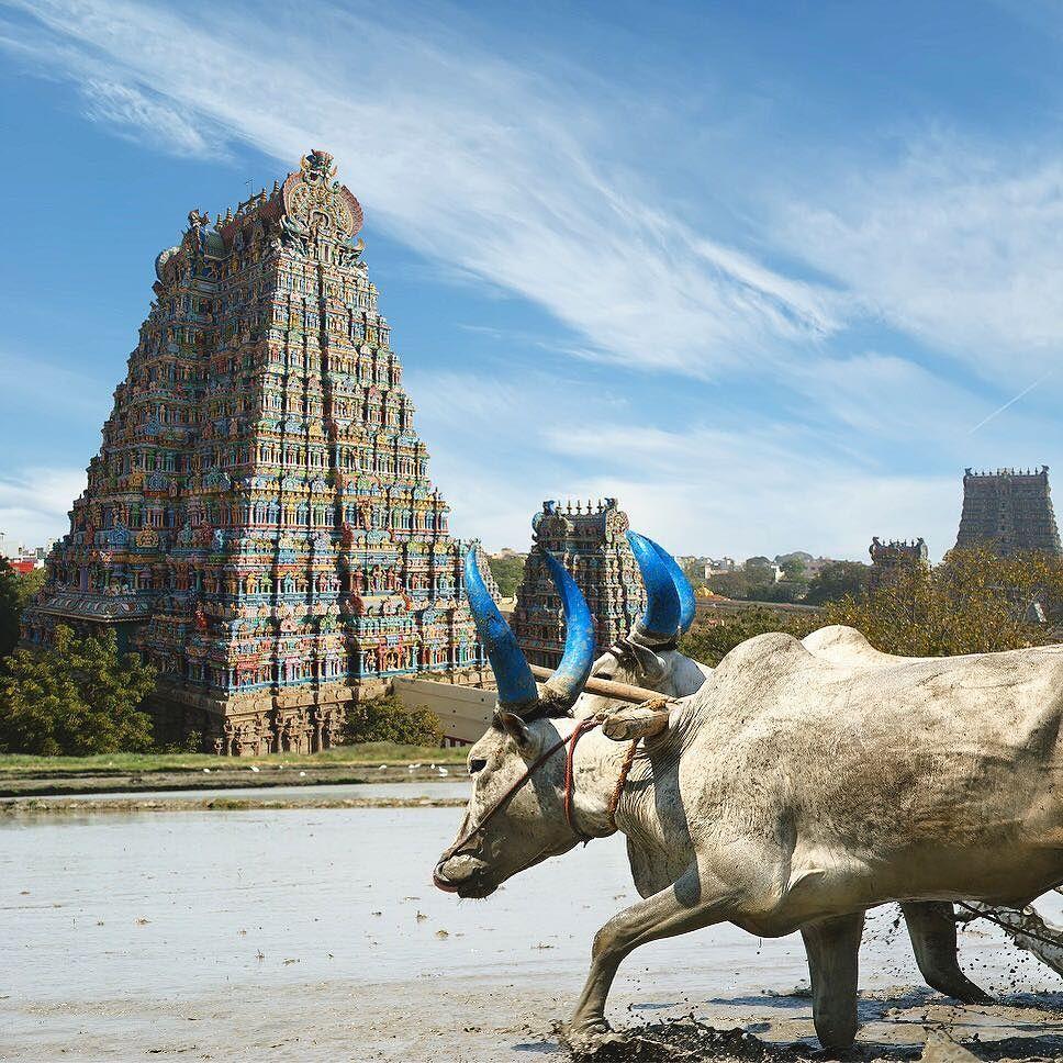 #TravelDreams sogno ardentemente il Tamil Nadu l'India autentica da vivere con un viaggio consapevole! Io mi organizzo e cerco compagni di viaggio alcune e più info le trovate tramite il mio blog. [link al post --> http://ift.tt/25WxnVi] #ConsciousJourneys #IncredibleIndia #India