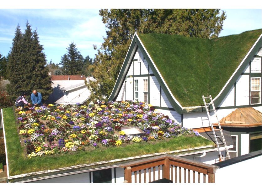 Troy S Green Roof Green Roof House Green Roof Green Roof System