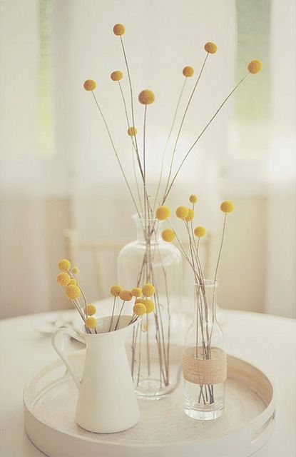 Yellow Fever Billy Buttons Yellow Fever Billy Balls