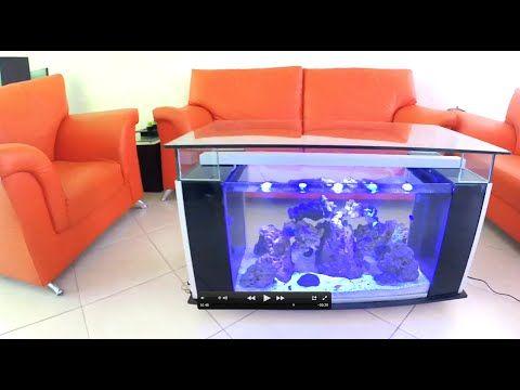 Youtube acuario pinterest acuario pecera y marina - Peceras para casa ...