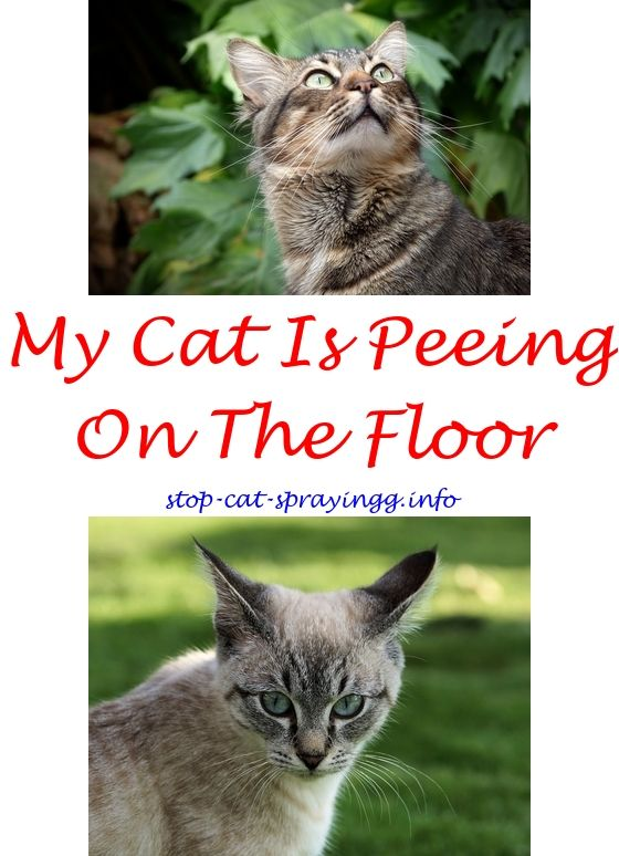 Clean Cat Spray Baking Soda | Cat Urine, Cat Urine Smells And Urine Smells