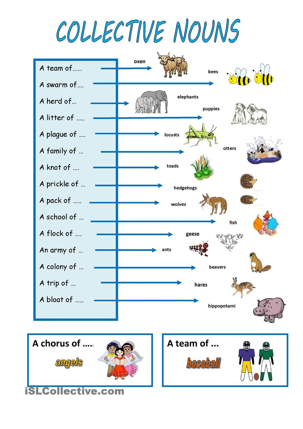 animal collective nouns Google Search Collective nouns