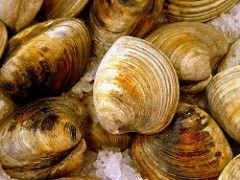 food may 2008 clams