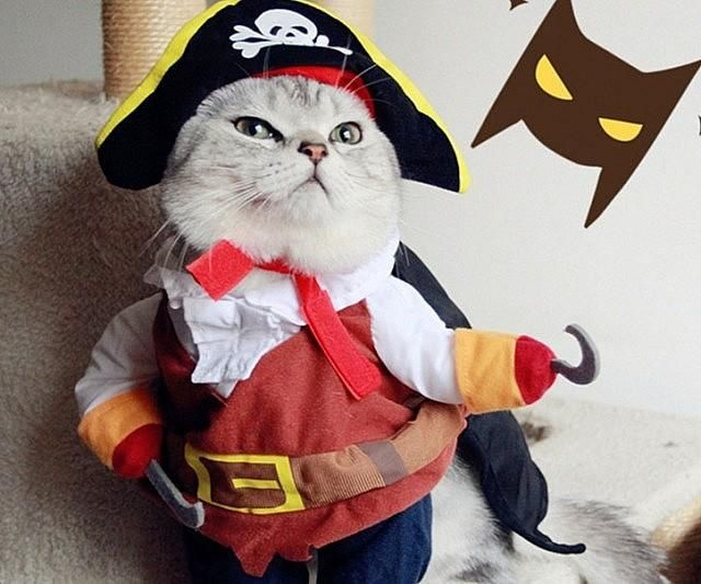 Cat Pirate Costume - Wonnered & Cat Pirate Costume - Wonnered | The Coolest Products on the Internet ...