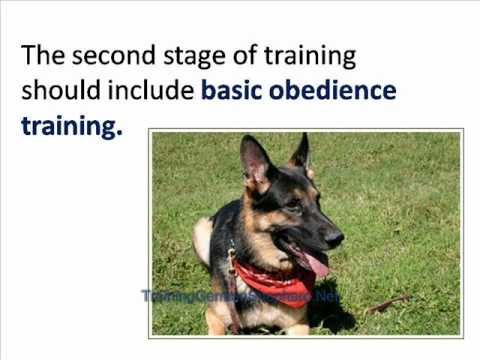 Training Your German Shepherd To Be A Guard Dog Http Www 7tv