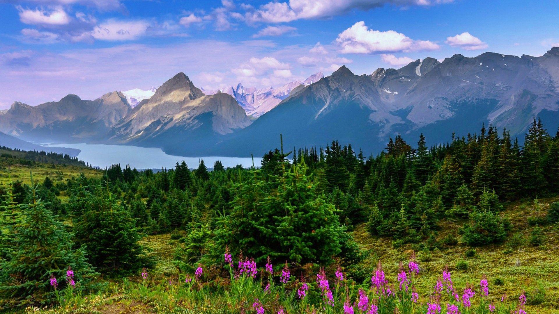 Beautiful Landscape Background Mountain Forest Trees Lake Flowers Schone Landschaften Landschaftsbau See