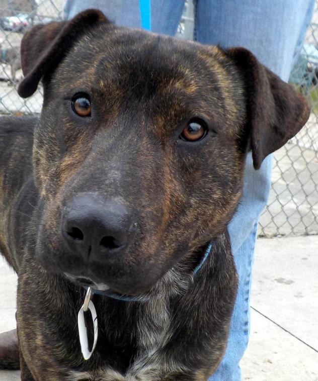 Adopt 17 Osman Adopted On Dog Breeds Mountain Cur Dog Terrier