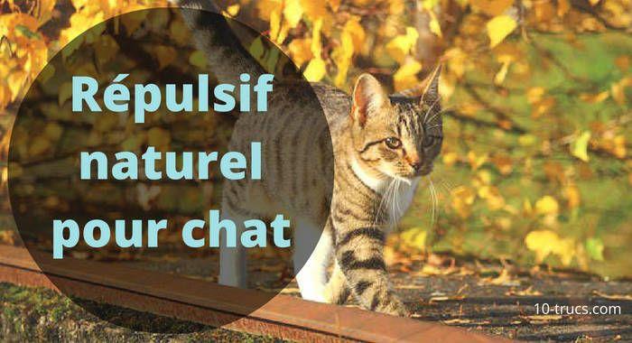 Un Chat Fait Pipi Partout 10 Trucs Pour Le Stopper Repulsif