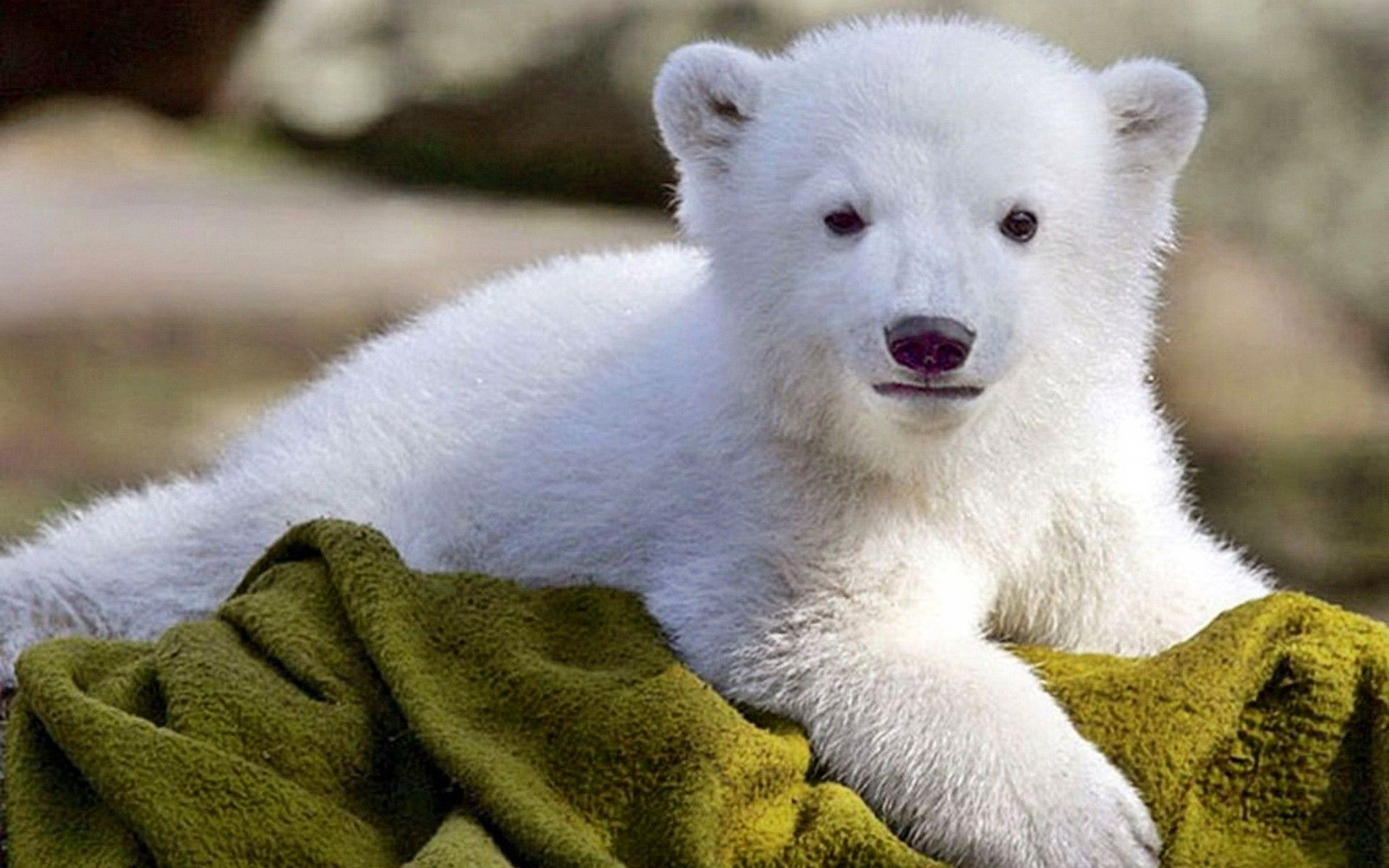 baby-animals-hd-wallpapers-download | baby animal cuteness