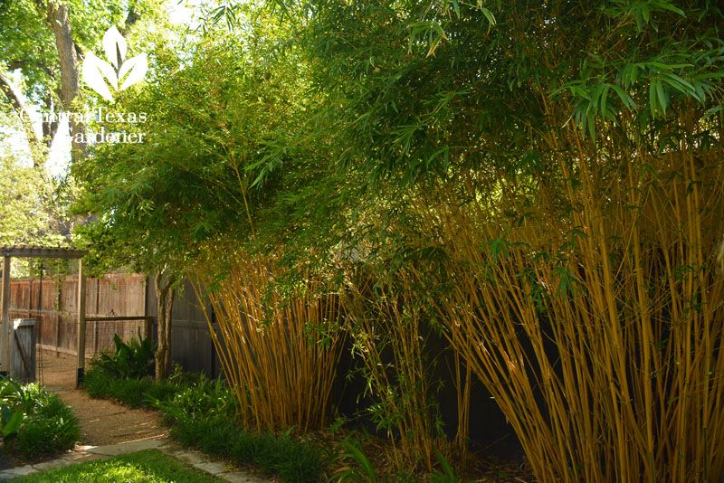 Alfonse Karr bamboo black fence romantic shady garden Chandler Ford ...
