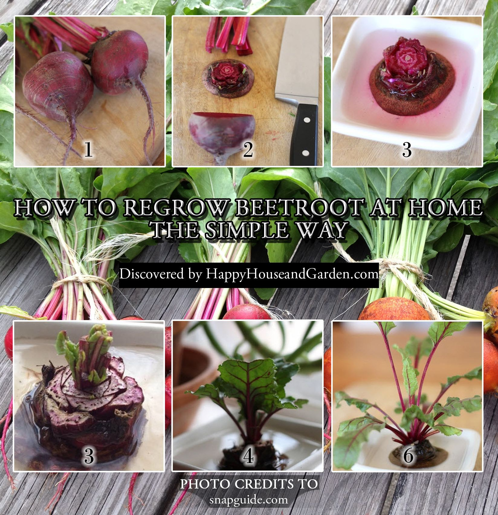 How To Regrow Beetroot At Home The Simple Way Plants In Bottles Beetroot Growing Vegetables