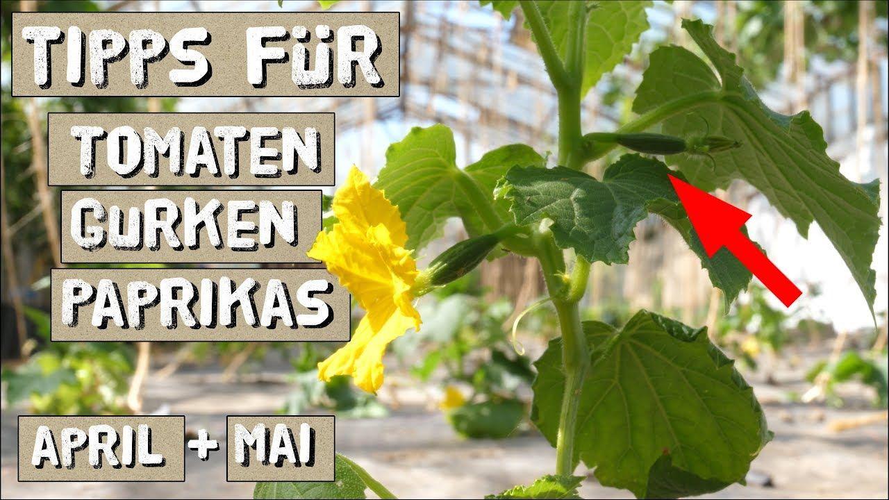 Pin Auf Garden Love