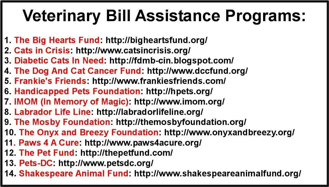 Vet bills assist (With images) Vet bills, Veterinary