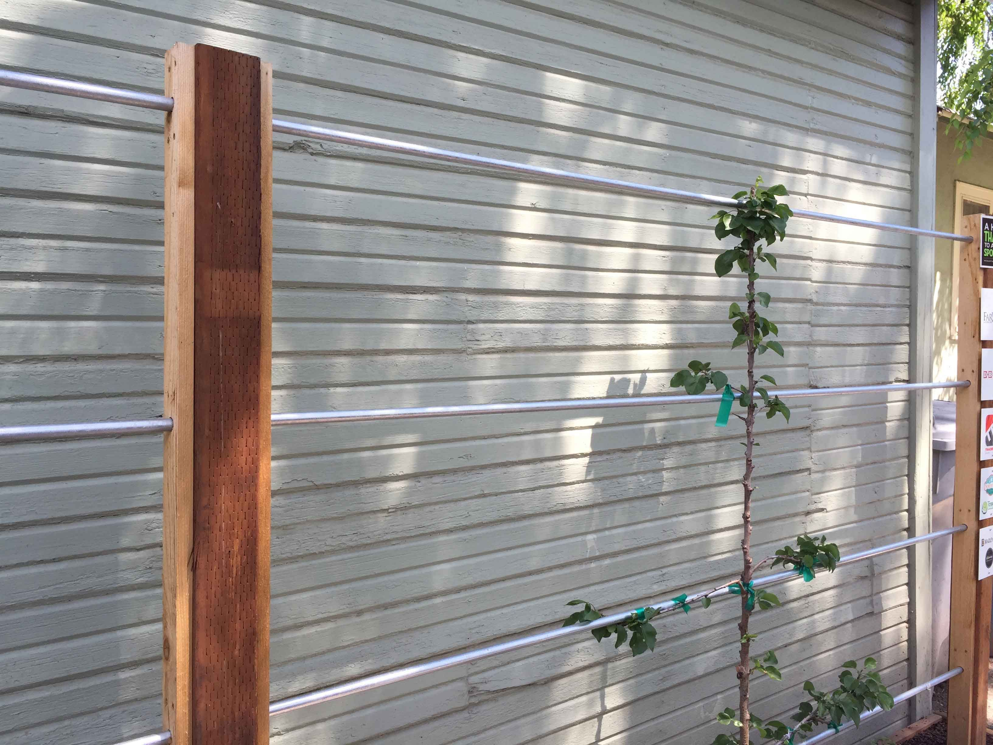 A beautiful and useful support for espalier fruit trees. Electrical ...