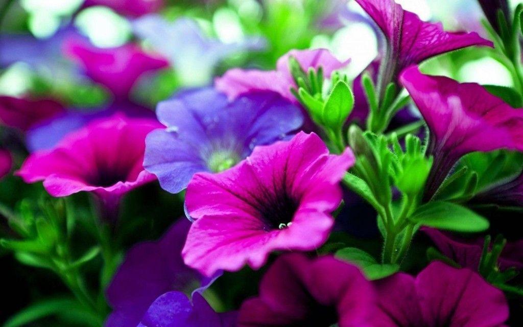 Flowers wallpaper free download for desktop wallpapers flower flowers wallpaper free download for desktop voltagebd Gallery