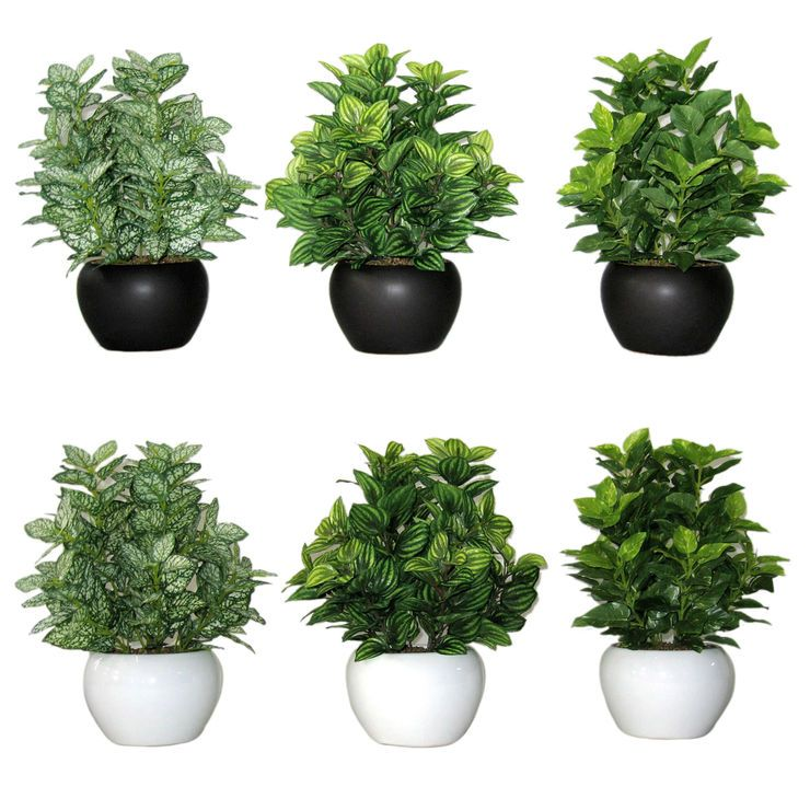 Assortment Of 6 Greenery Plant Ceramic Pots 10 In Fake Potted Plants Fake Plants Decor Plants