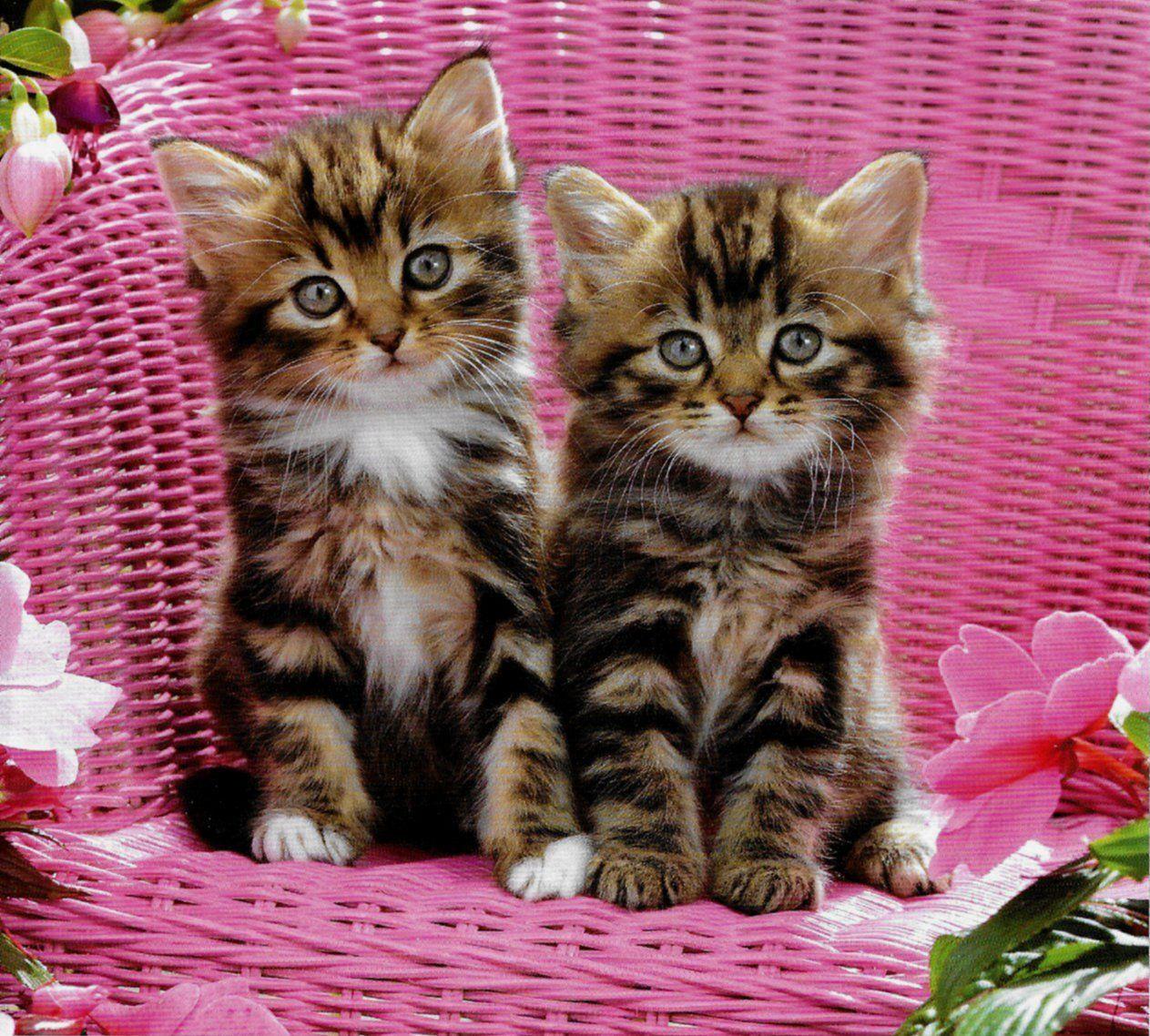 Cute pair of little tabby kittens sitting on a garden