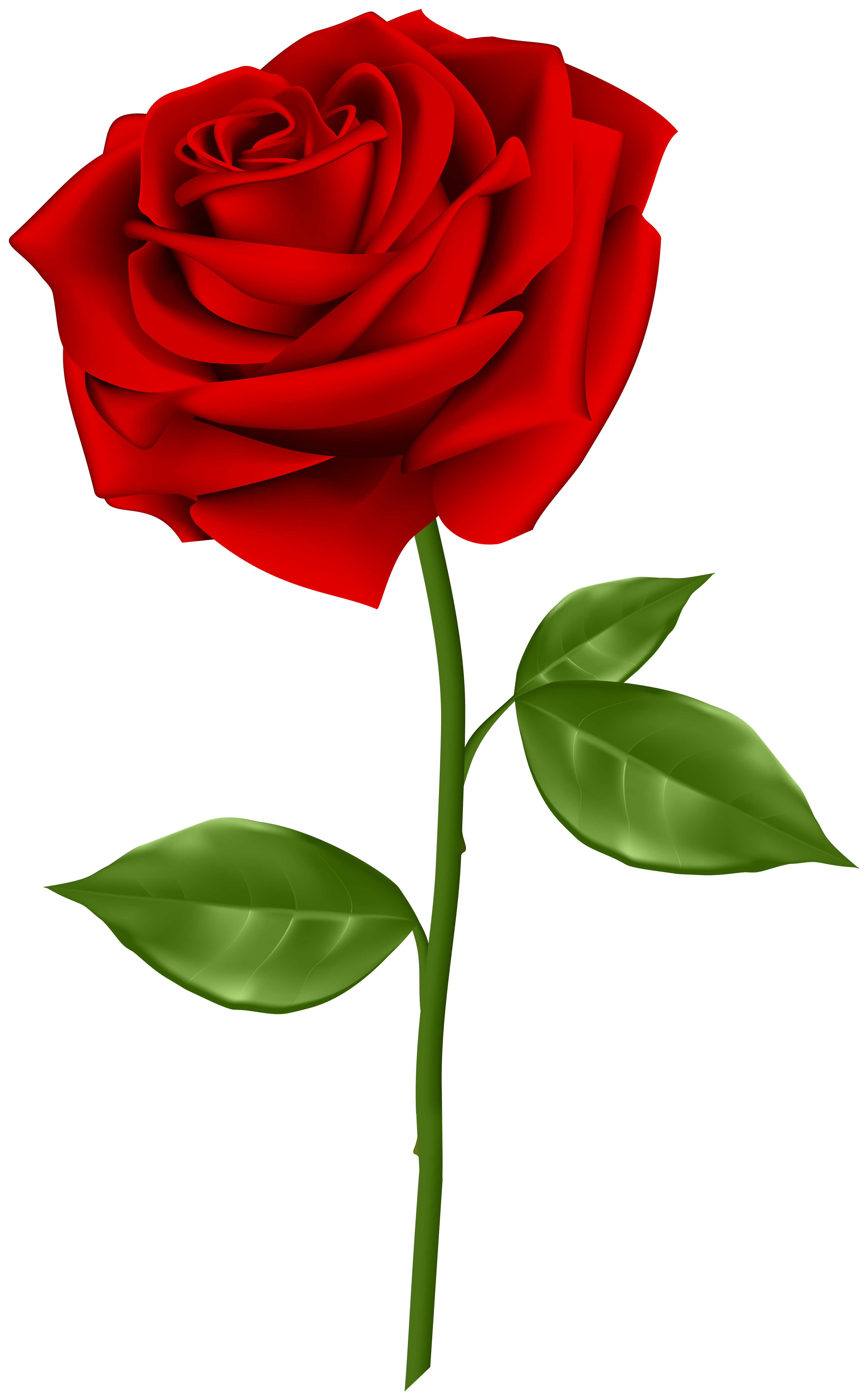 red rose transparent png clip art gallery yopriceville high rh pinterest com