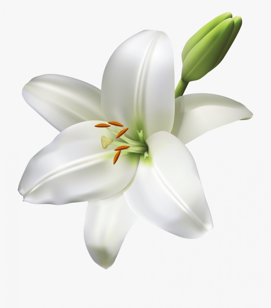 Seven Questions To Ask At Lily Flower Png Lily Flower Png Https Ift Tt 2obivnq Lily Flower Easter Lily Flower Trendy Flowers