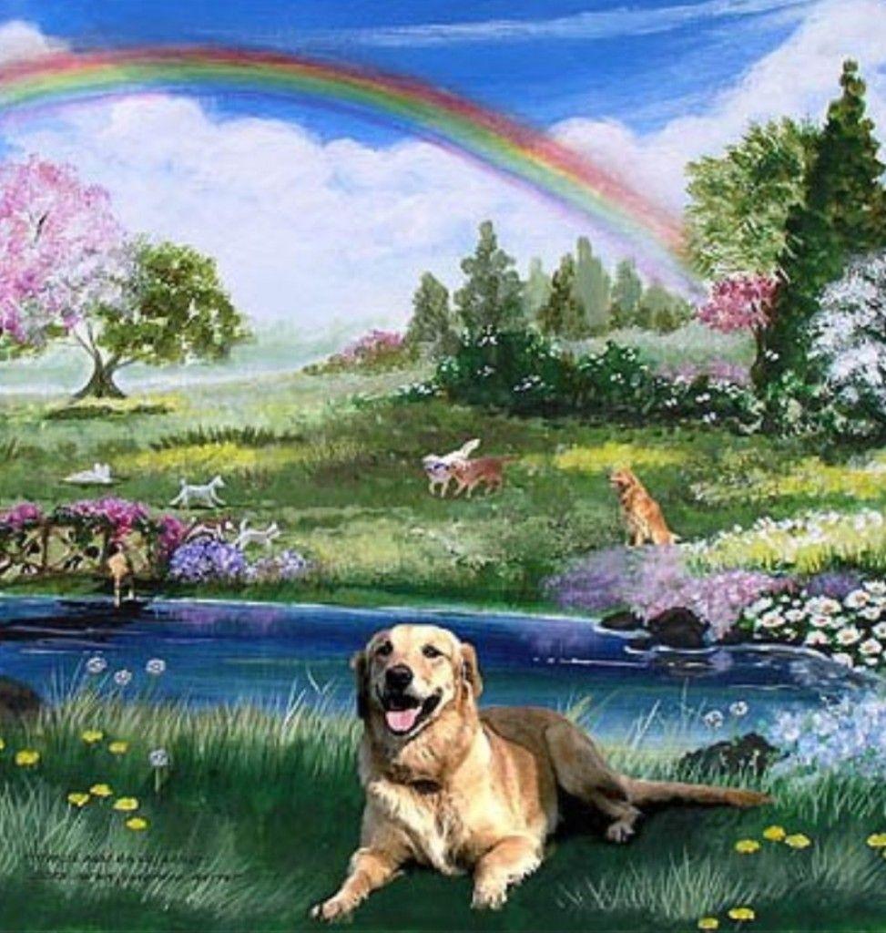 Shreveport, Dog Heaven? Dog heaven, Rainbow bridge, Pet