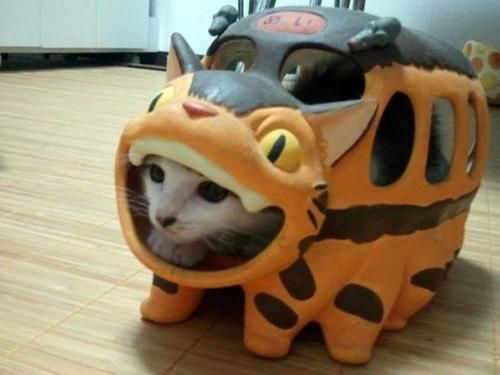 Cat in a Cat Bus!   The cat bus is from My Neighbor Totoro!  Too cute!