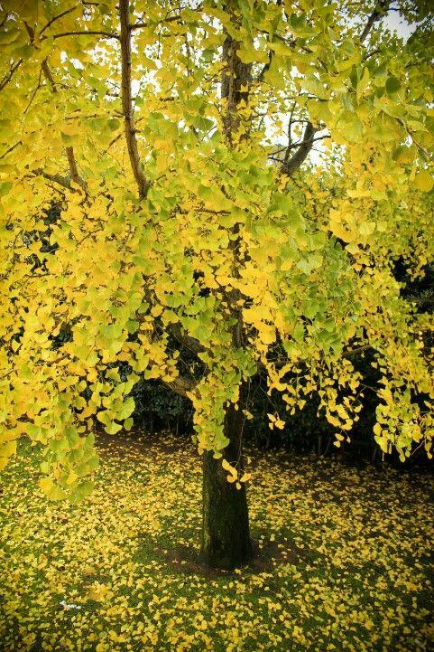 Natural yellow...