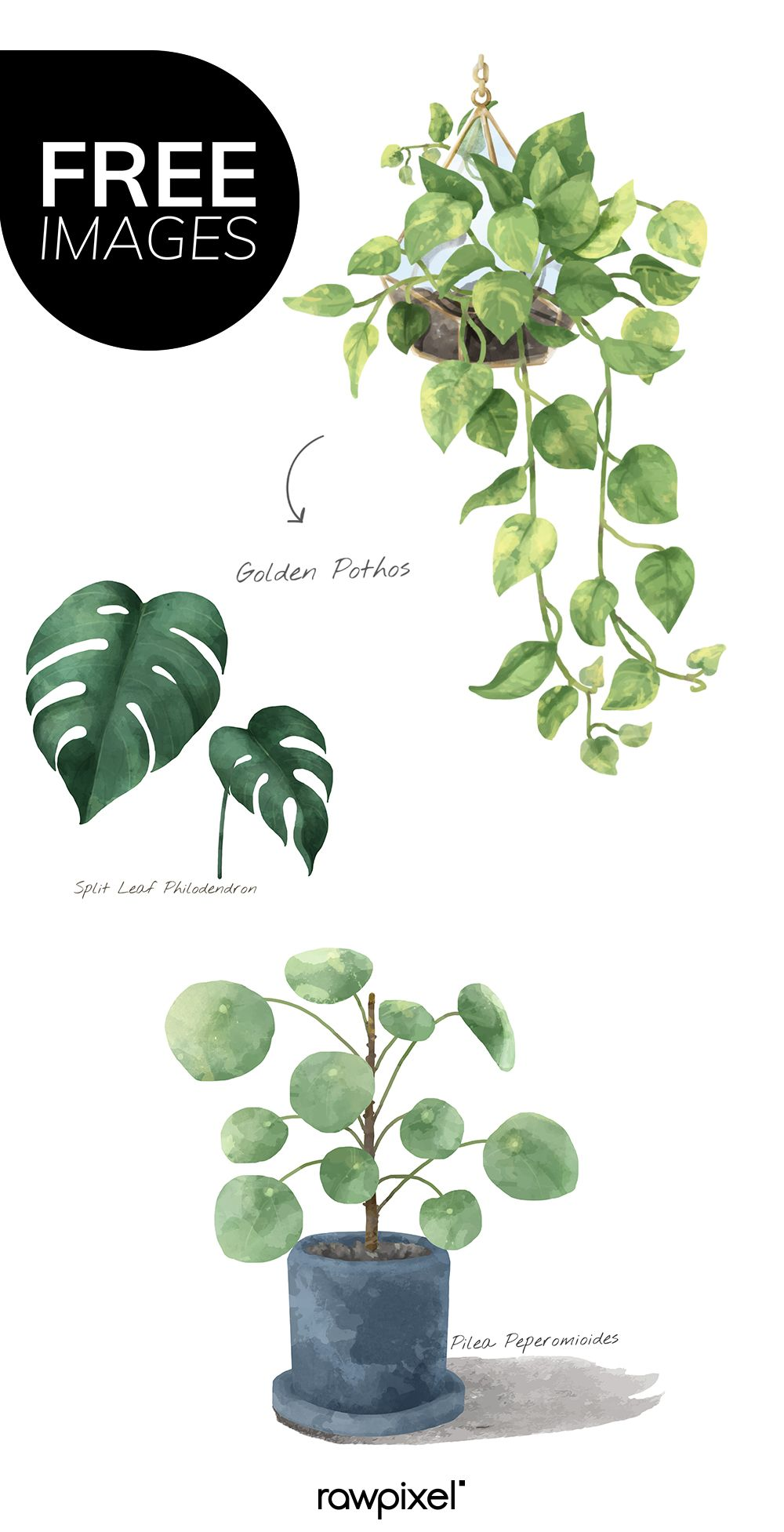 Download Free Images Of Watercolor Plants At Rawpixel Com