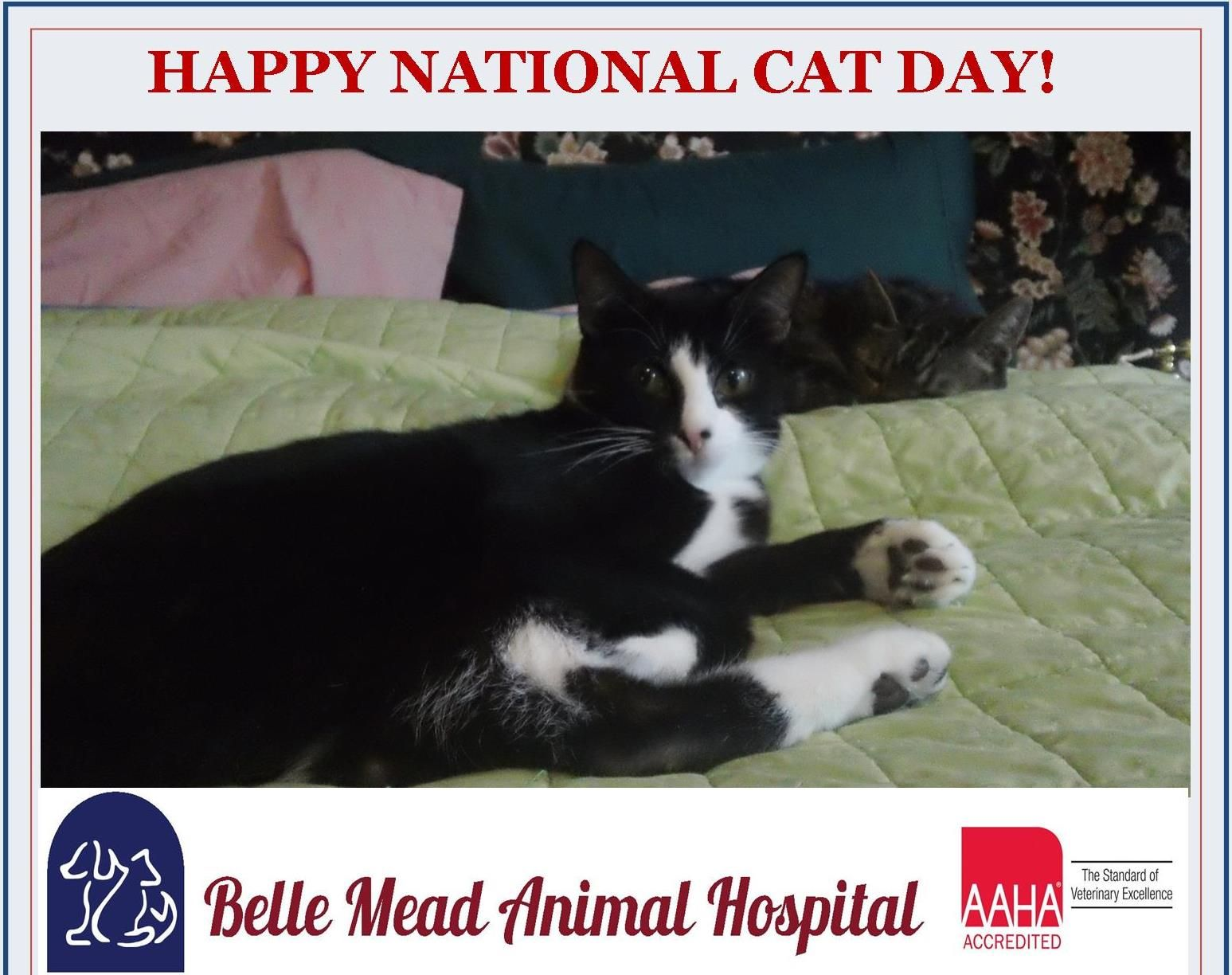 Happy National Cat Day October 29th !! Events and