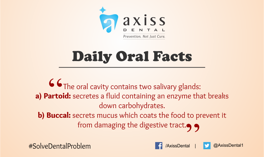 Pin on Daily Oral Facts